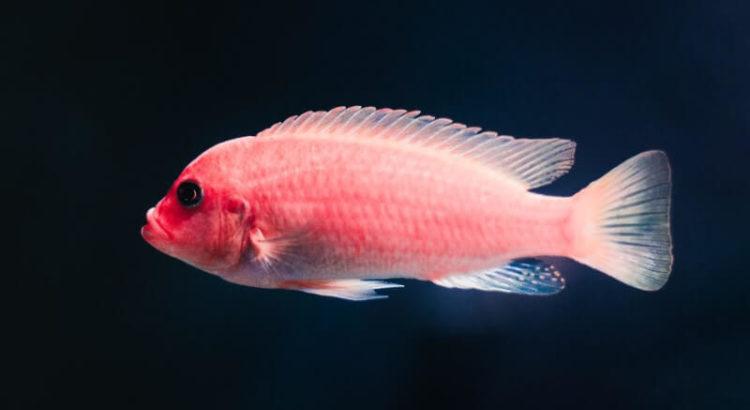 Imagem do perfil de um peixe.